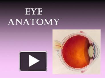 PPT - Eye Anatomy PowerPoint presentation | free to ...