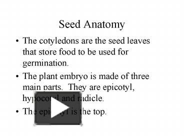 PPT – Seed Anatomy PowerPoint presentation | free to download - id ...