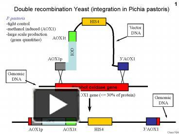 Ppt Double Recombination Yeast Integration In Pichia