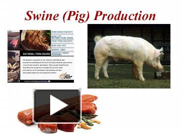 PPT – Swine Pig Production PowerPoint presentation | free to