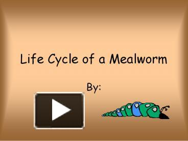 Mealworm to Darkling Beetle in under two minutes ...