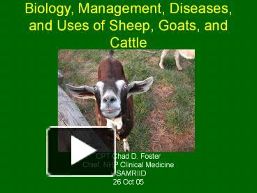 PPT – Biology, Management, Diseases, and Uses of Sheep