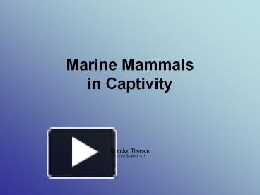 keeping marine mammals in captivity essay Keeping killer whales in captivity should   killer whales kept in captivity essay - for.