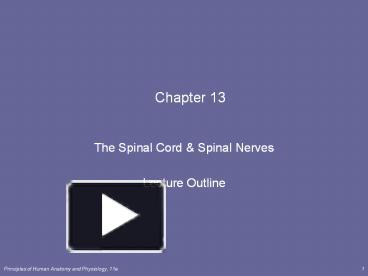 chapter 13 the spinal cord and spinal nerves