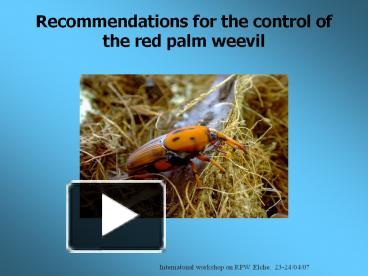 PPT – Recommendations for the control of the red palm weevil
