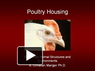 PPT – Poultry Housing PowerPoint presentation | free to