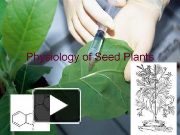 PPT – Physiology of Seed Plants PowerPoint presentation