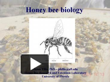 PPT Honey Bee Biology PowerPoint Presentation