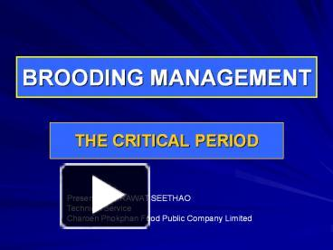 PPT – BROODING MANAGEMENT PowerPoint presentation | free to view