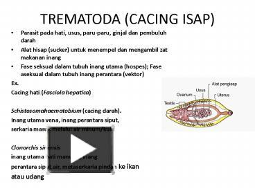 PPT – TREMATODA (CACING ISAP) PowerPoint presentation | free