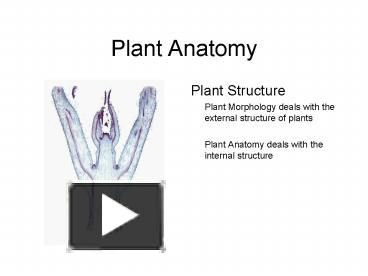 PPT – Plant Anatomy PowerPoint presentation | free to view - id ...