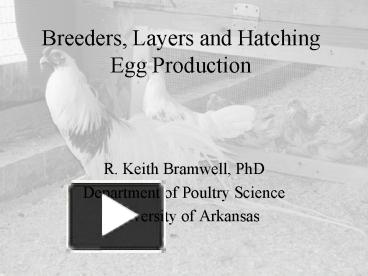 PPT – Breeders, Layers and Hatching Egg Production