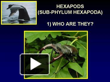 PPT – HEXAPODS SUBPHYLUM HEXAPODA 1 WHO ARE THEY PowerPoint