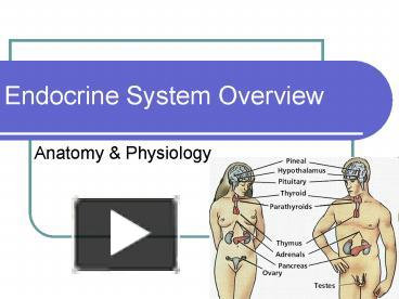 Ppt endocrine system overview powerpoint presentation free to ppt endocrine system overview powerpoint presentation free to download id 718ca0 owvmn toneelgroepblik Choice Image