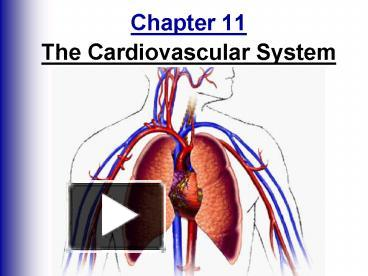 PPT - Chapter 11 The Cardiovascular System PowerPoint ...