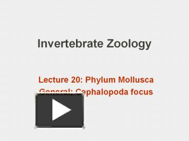 Ppt invertebrate zoology powerpoint presentation free to ppt invertebrate zoology powerpoint presentation free to download id 7aa7d9 zjhlm toneelgroepblik Image collections