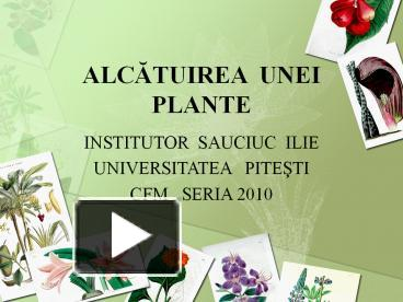 Ppt Alcatuirea Plante Powerpoint Presentation Free To Download Id Mdqy