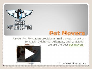 PPT – Pet Movers PowerPoint presentation | free to download
